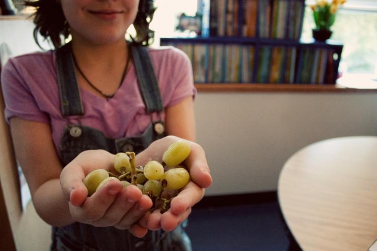 Grapes 0002