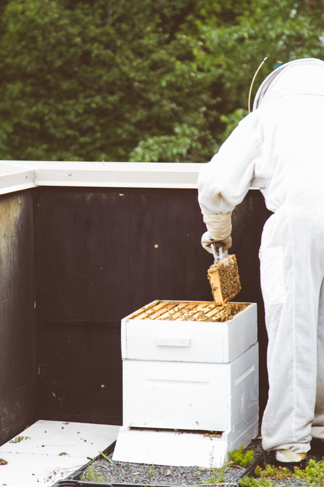 2015-04-28 Honey Harvest -1