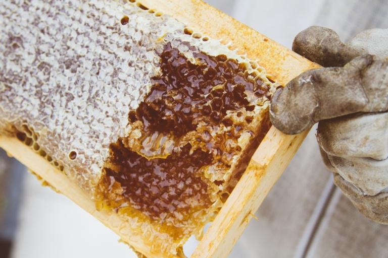 2015-04-28 Honey Harvest -13