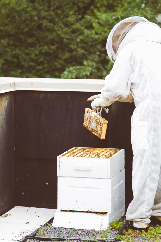 2015-04-28 Honey Harvest -2