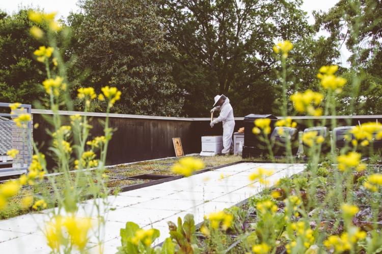 2015-04-28 Honey Harvest -3