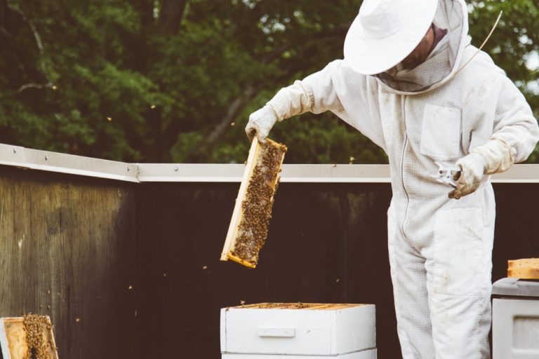 2015-04-28 Honey Harvest -4