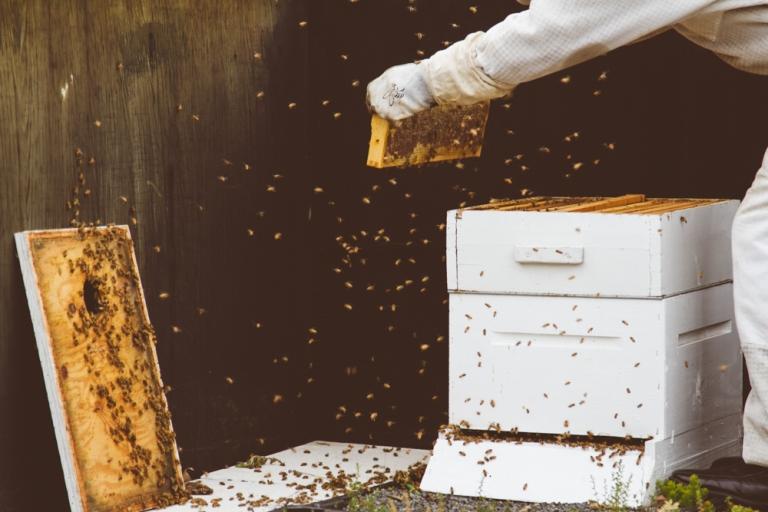 2015-04-28 Honey Harvest -5