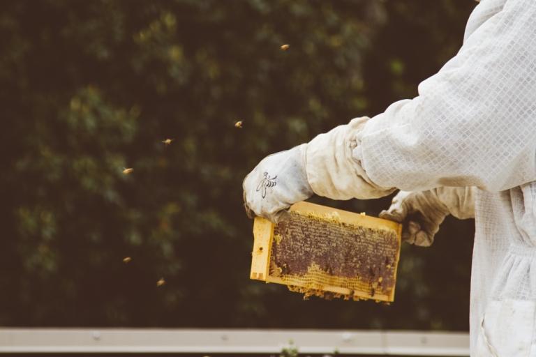 2015-04-28 Honey Harvest -6