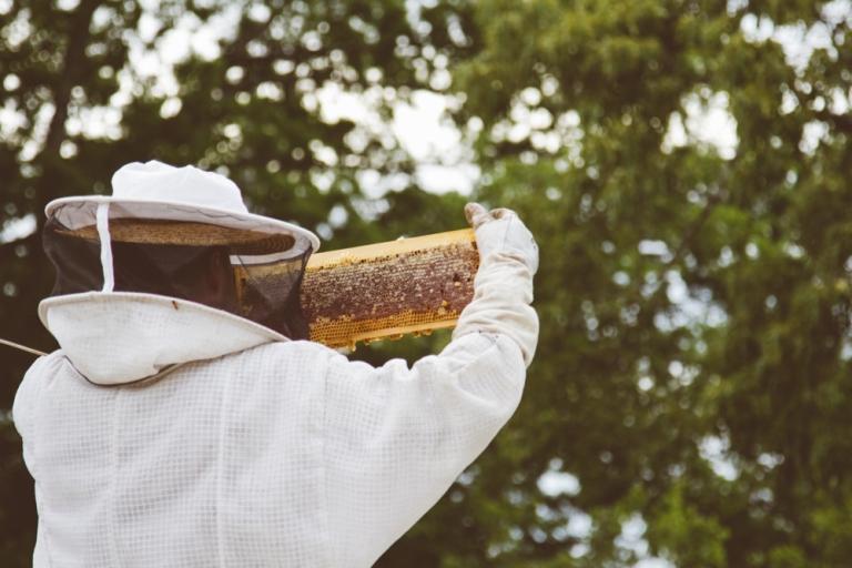 2015-04-28 Honey Harvest -7