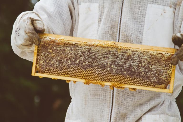 2015-04-28 Honey Harvest -8