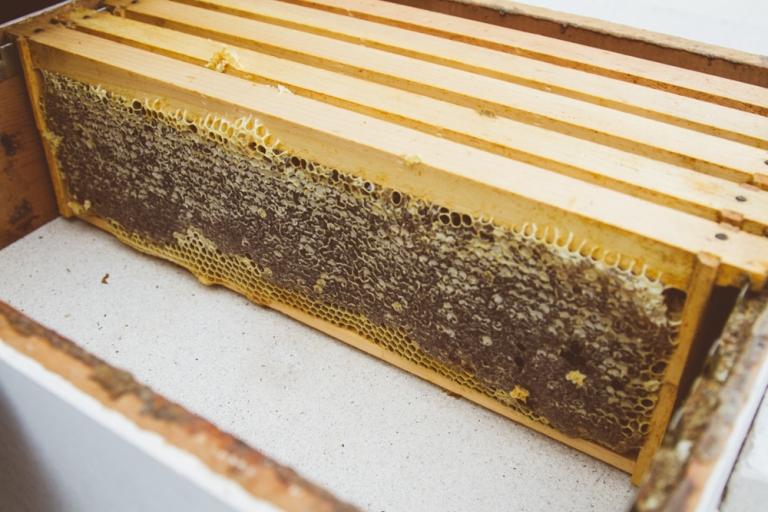 2015-04-28 Honey Harvest -9