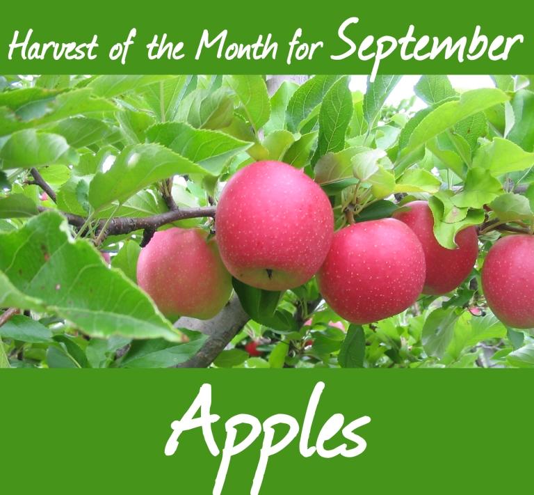 2105-09 Apples