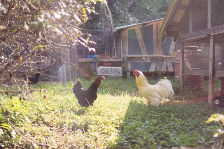 2015-06-19 Sharko Farms -4