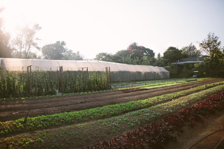 2015-12-29 Farm Visit 15